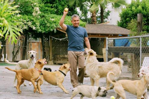 Cesar Millan, kutyaviselkedési szakember
