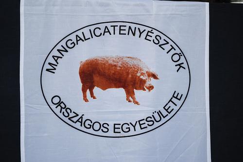 V. Mangalicafesztivál
