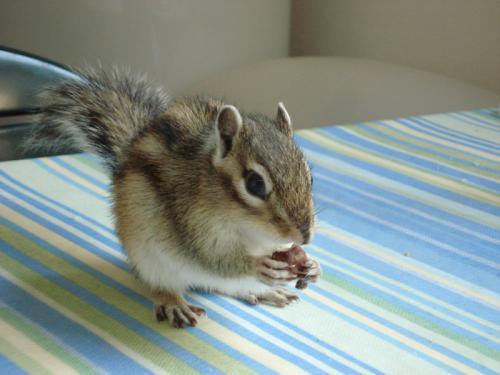 Micike, a mókus